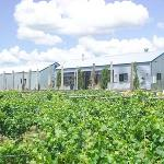 Our vines and cellar door