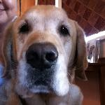 Sweet doggie Zeke