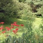Tucker Hill Gardens