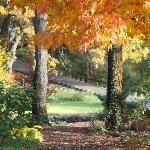 Taltree in the fall