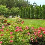 Hitz Family Rose Garden