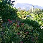 Teil des Garten Geländes