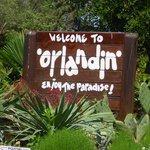 Orlandin