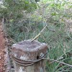 Buraco das Araras mantis