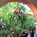 suo giardino tropicale....