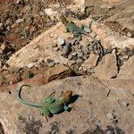 Crow Canyon Archaeological Center Photo
