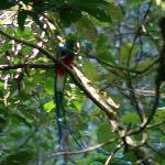 Quetzel (not as good as John's photo but at least I got it!!!)