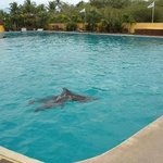 dolphins at puerta vallarta adventures where you wait to board the boat for rhythms of the night