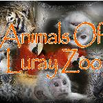 animals of lurayzoo