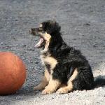 Einer unserer Hunde