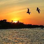 Sunset and Pelicans