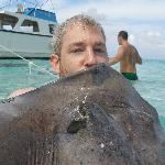 Kissing a stingray at Stingray City - Grand Cayman