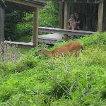 Wildlife abounds at the lodge