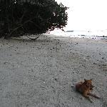 Beach early morning