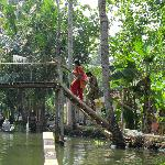 Alleppey backwater canals