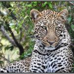 Safari Kenya Watamu