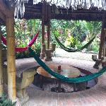 More hammocks!