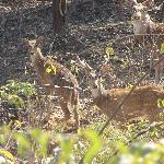 Deers ,so close by.