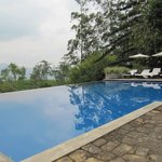 A view of the infinity pool at Lavender Hse
