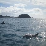 2 out of 30 dolphins following the boat
