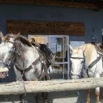 Lovely Appaloosa Horses