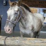 "The Horse I rode - ""Zeb"""