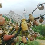 Albero di vasi