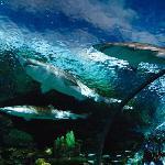 萊利大煙山水族館