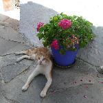 это наше домашнее животное. :-)