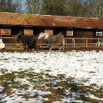 Horse paddock next-door