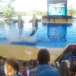 Loro Parque Whale Show