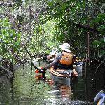 Kayaking a mangrove tunnel