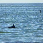 Dolphins, right off the shore!