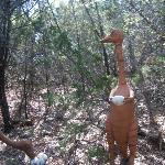 dinosaur on the trail out back