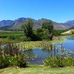 winery vista