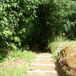 begin the trail