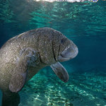 Manatee Fun Tours