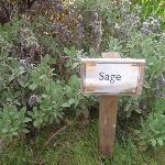Herbs grown in our own garden