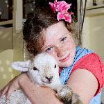 lambs during spring