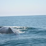 whale off the La Morena with Capitan Juan