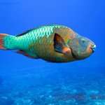 Discover Scuba diving lessons
