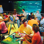 Foto de Ripley's Aquarium Feeding Frenzy Restaurant