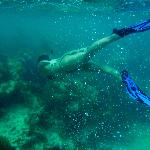 Free diving the Bahamian reef