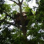 Arborismo en el Bosque de Robles