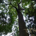 Bosque de Robles - Parque Natural Chicaque