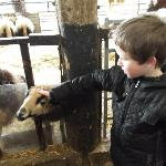 my son liked the goats