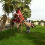 my daughter had a nice camel ride out side the hotel and even got a second ride the next day for