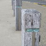 Paua shell in bollards