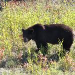 a furry friend on the 4 wheeler trail