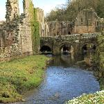 Snowdrops on the bank of River Skell, Fountains Abbey
